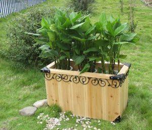 樟子松花箱